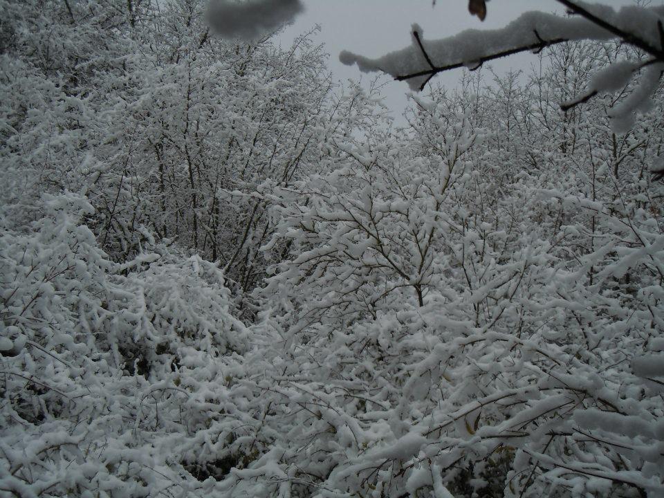 Neige dans l'Indre en février 2012.