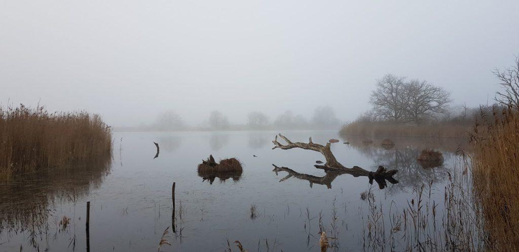 brouillard bis bis