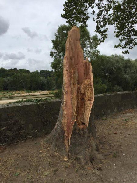Arbre cassé sur les bords de Loire - Tours (37)